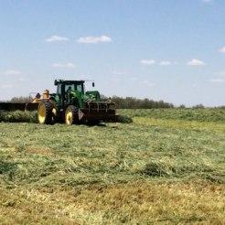 Merging spring grass