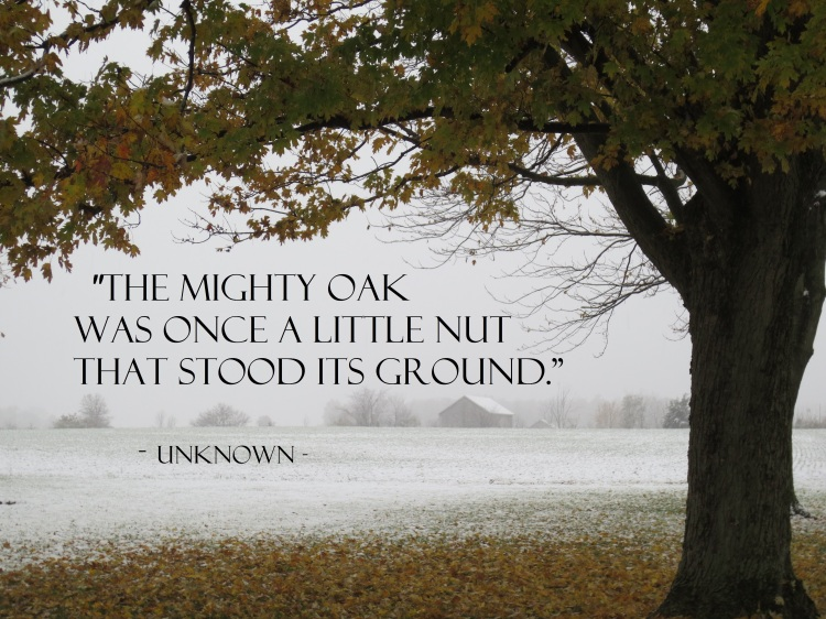 Quote ~ Mighty Oak