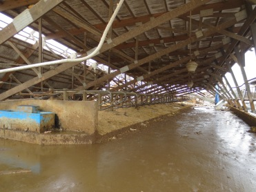 Free Stall Barn